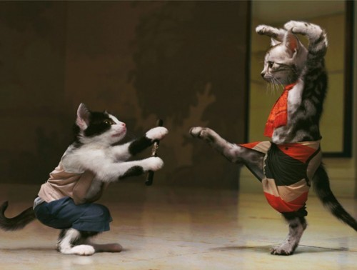 cats_fighting